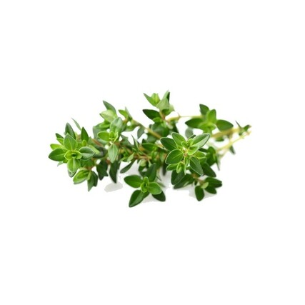 Thyme plant large_preview620