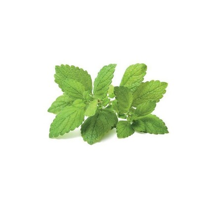 refill_0007_lemon_balm