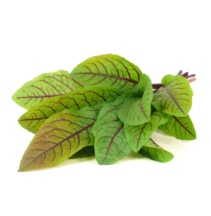 Bloody Sorrel plant large2676
