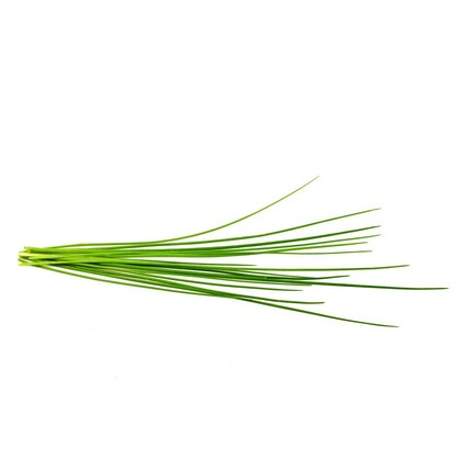 Chives plant large 2000