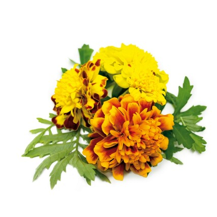 french_marigold_plant_large2000_0
