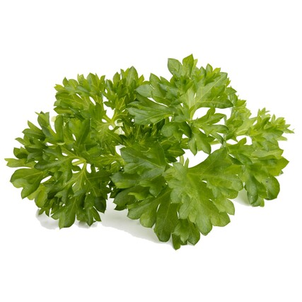 Parsley plant large3000