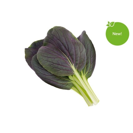 1200x960-Red-Bok-Choy-new-sticker