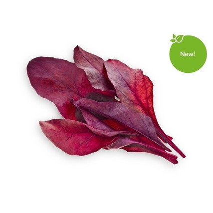 Red_Leaf_Beet_1200x960_sticker